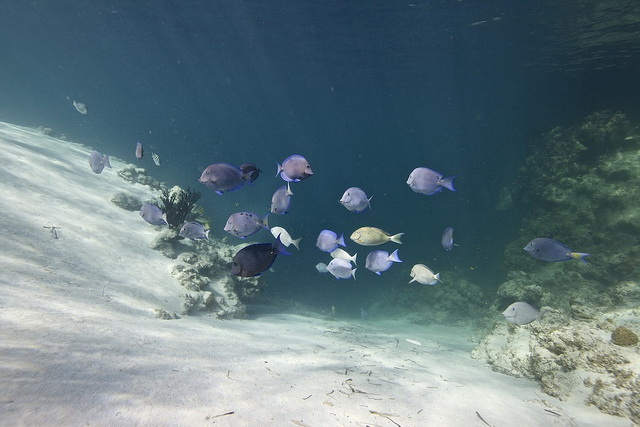 Dean's blue hole underwater